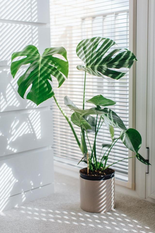 Achetez quelques jolies plantes